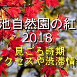 栂池自然園の紅葉2018の見ごろ時期は?電車や車のアクセスや渋滞情報も