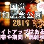 国営昭和記念公園の桜2019のライトアップはある?時間帯や期間と混雑状況も