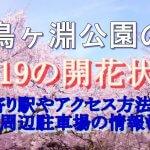 千鳥ヶ淵公園のお花見2019桜の開花状況!最寄り駅やアクセス方法は?周辺駐車場の情報も