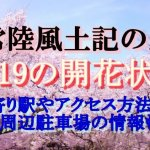 常陸風土記の丘の桜2019の開花状況!最寄り駅やアクセス方法は?周辺駐車場の情報も