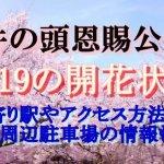 井の頭恩賜公園の桜2019の開花状況!最寄り駅やアクセス方法は?周辺駐車場の情報も