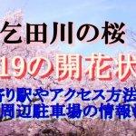 乞田川の桜2019の開花状況!最寄り駅やアクセス方法は?周辺駐車場の情報も