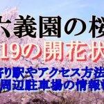 六義園のお花見2019桜の開花状況!最寄り駅やアクセス方法は?周辺駐車場の情報も