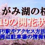 さがみ湖リゾートプレジャーフォレストの桜2019の開花状況!最寄り駅やアクセス方法は?周辺駐車場の情報も