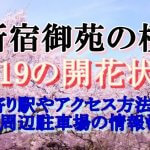 新宿御苑のお花見2019桜の開花状況!最寄り駅やアクセス方法は?周辺駐車場の情報も