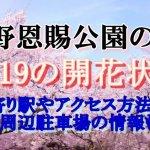 上野恩賜公園のお花見2019桜の開花状況!最寄り駅やアクセス方法は?周辺駐車場の情報も