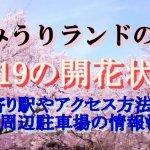 よみうりランドの桜まつり2019の開花状況!最寄り駅やアクセス方法は?駐車場の情報も