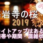 梅岩寺の桜2019のライトアップはある?時間帯や期間と混雑状況も