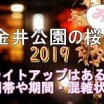 小金井公園の桜2019のライトアップはある?時間帯や期間と混雑状況も
