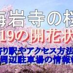 梅岩寺の桜2019の開花状況!最寄り駅やアクセス方法は?周辺駐車場の情報も