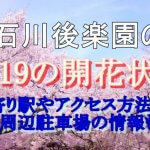 小石川後楽園の桜2019の開花状況!最寄り駅やアクセス方法は?周辺駐車場の情報も