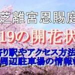 旧芝離宮恩賜庭園の桜2019の開花状況!最寄り駅やアクセス方法は?周辺駐車場の情報も