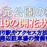 水元公園の桜2019の開花状況!最寄り駅やアクセス方法は?周辺駐車場の情報も