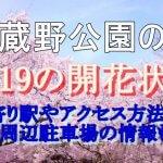 武蔵野公園の桜2019の開花状況!最寄り駅やアクセス方法は?周辺駐車場の情報も