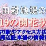 塩田耕地堤の桜2019の開花状況!最寄り駅やアクセス方法は?周辺駐車場の情報も