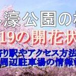 外濠公園の桜2019の開花状況!最寄り駅やアクセス方法は?周辺駐車場の情報も
