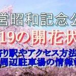 国営昭和記念公園の桜2019の開花状況!最寄り駅やアクセス方法は?周辺駐車場情報も