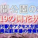 浮間公園の桜2019の開花状況!最寄り駅やアクセス方法は?周辺駐車場の情報も